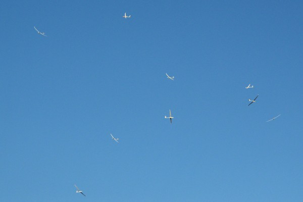 Gaggle : collective noun for a group of gliders